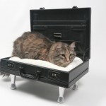 diy cat bed briefcase