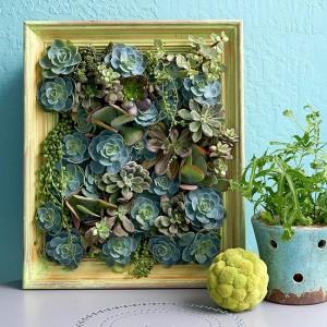 succulent picture